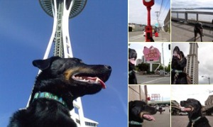 View Milo on the iconic tour of Seattle