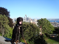 Milo and Seattle from Kerry Park