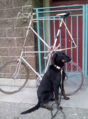 Milo and a tall bicycle