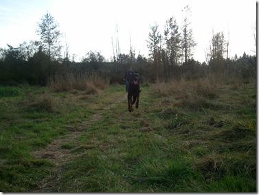 Happy running Milo at the farm