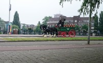 The Heineken horses