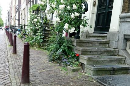 Front gardens-1