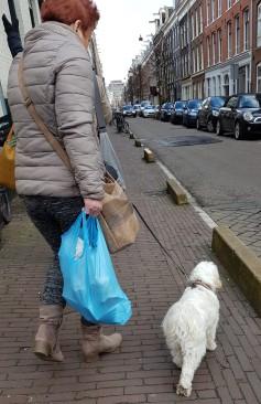 Dog walking 1