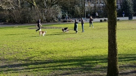 Local dog park